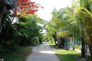 My smile never faded biking on these bumpy back roads on Ambergris Caye.